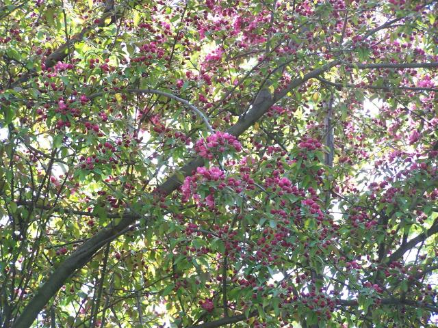 springtreebudsmaller.jpg